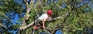 Scottsdale AZ Tree Trimming