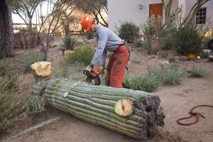 Scottsdale,AZ Cactus Removal Service